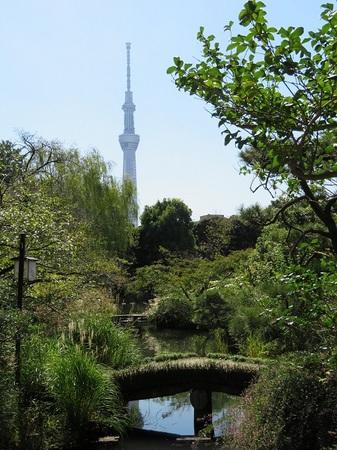 -2- 向島百花園から望む 東京スカイツリー.JPG
