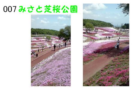 007-みさと芝桜公園.jpg