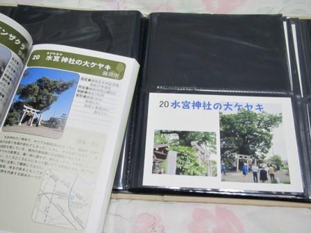 020 水宮神社の大ケヤキ (1).JPG