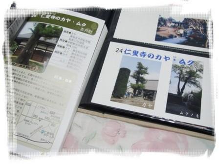 024 仁叟寺のカヤ・ムク (1).JPG