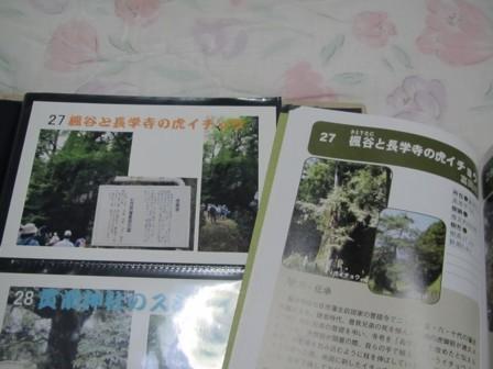 027 楓谷と長学寺の虎イチョウ (5).JPG