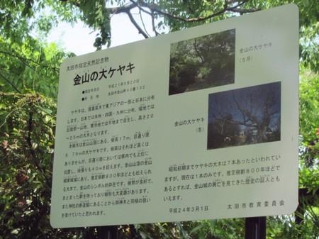 0506 新田神社のケヤキ (4).JPG