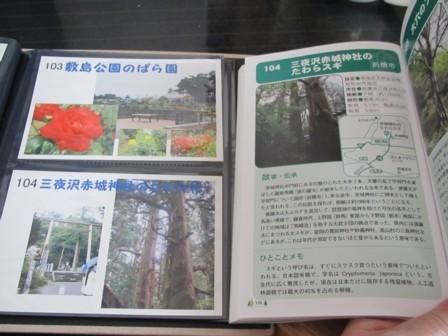 104 三夜沢赤城神社のたわら杉 (1).JPG