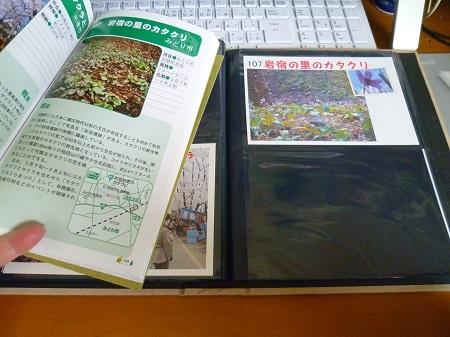 107番 岩宿の里のカタクリ (3).JPG