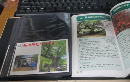 122番 新田神社のケヤキ (6).JPG