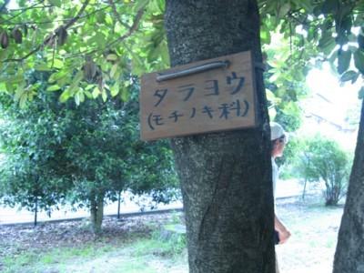 20100608 (14)●しっかり覚えたことは「ふくろうの幼鳥」だけ!?.JPG