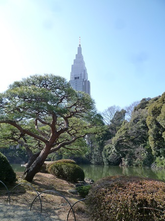 20150204 新宿御苑 (3).JPG