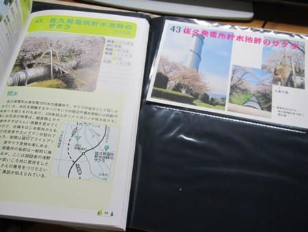 43番 佐久発電所貯水池畔のサクラ (1).JPG