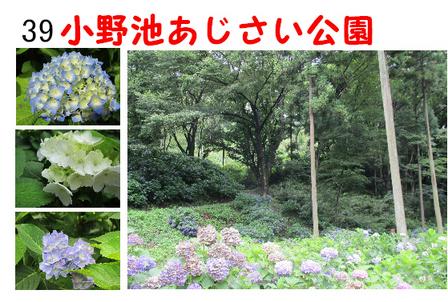 あじさい公園 (6).jpg