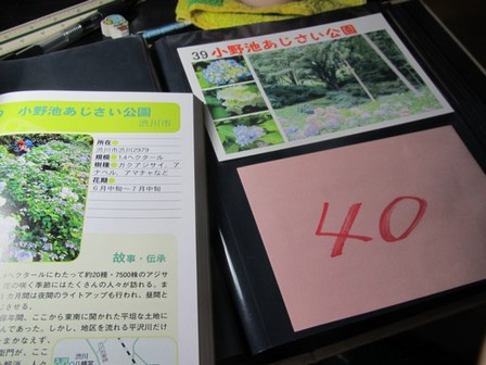 あじさい公園 (7).JPG