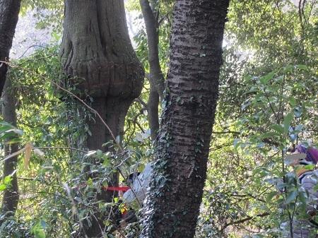 アラカシツリー第1展望台.JPG