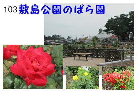 バラ園 (1).jpg