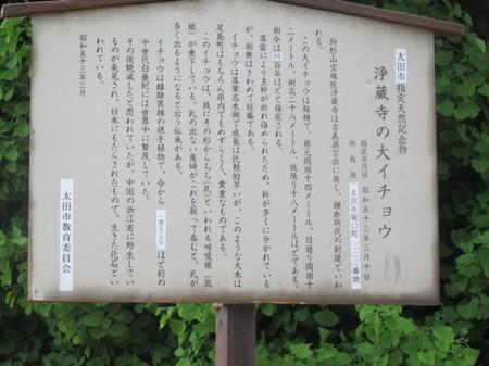 0506 浄蔵寺の大イチョウ (5).JPG