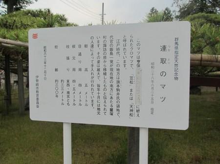 0506 連取のマツ (5).JPG