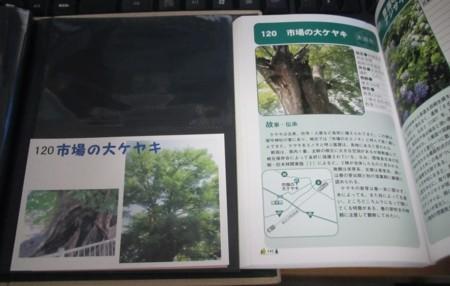 120番 市場の大ケヤキ (4).JPG