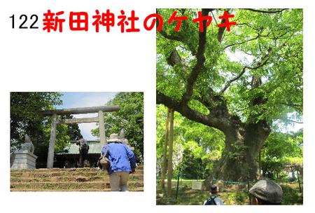 122番 新田神社のケヤキ.jpg